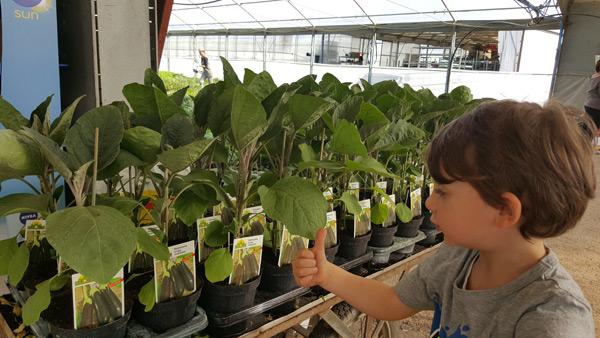 Le confezioni delle nostre piante for Melanzane innestate