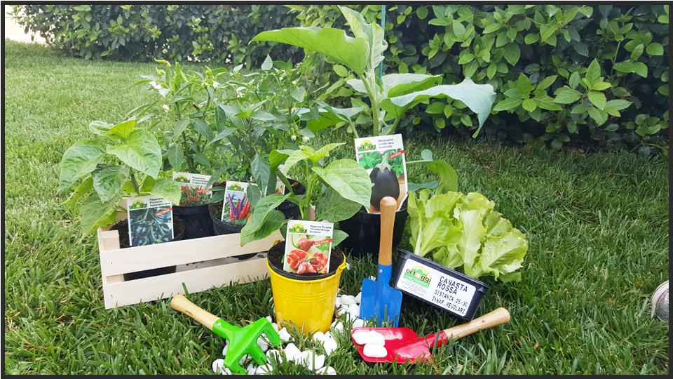 Ortoggi vivaio a forl con piante da orto e piantine da fiore for Cosa piantare nell orto adesso