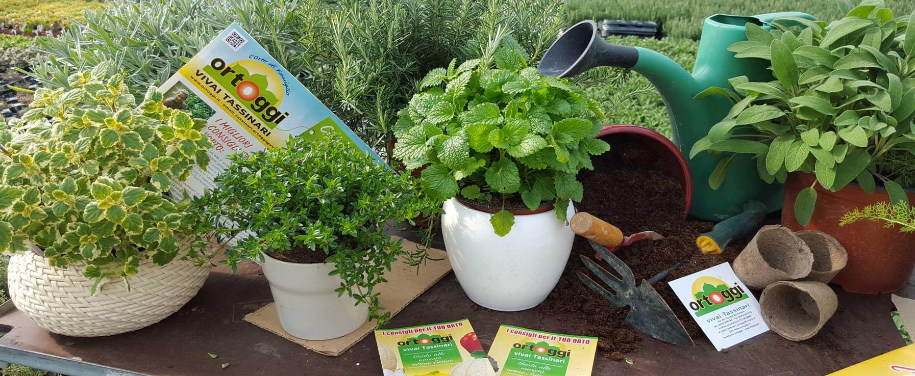Ortoggi vivaio a forl con piante da orto e piantine da fiore for Vendita piante orto