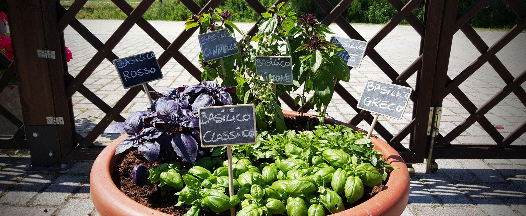 """Come Coltivare Pomodori Sul Balcone orto sul balcone - moda """"green"""""""